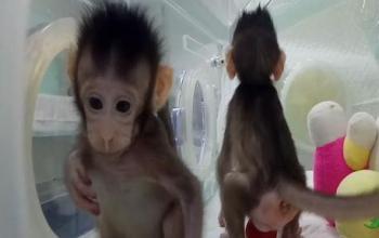 Fantascienza.com, il meglio della settimana delle scimmie insonni