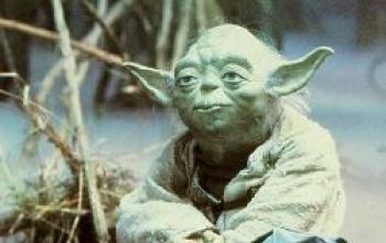 La forza scorre potente nella cavia Yoda