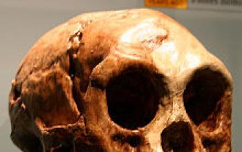 Vietato usare la parola Hobbit in antropologia, ma anche altrove