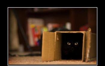 Il gatto di Schrödinger è vivo e lotta insieme a noi