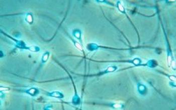 Sullo sperma sintetico