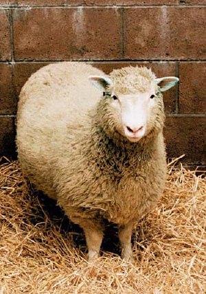 La pecora Dolly è stato il primo mammifero clonato (ufficialmente).