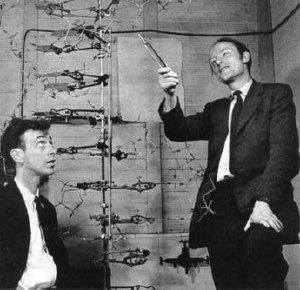 Aiutandosi con un modello tridimensionale, James D. Watson (a sinistra) e Francis Crick (a destra) spiegano l'elica del DNA.