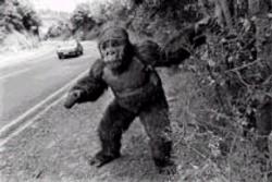 Una curiosa immagine di Peter Jackson fotografato nel 1982 a Pukerua Bay, in Nuova Zelanda. Il regista ha sempre avuto in mente di poter un giorno fare un remake di uno dei suoi film preferiti.
