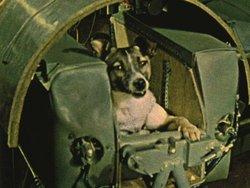 Laika, il primo essere vivente a viaggiare nello spazio. Era il 3 novembre 1957.