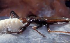 Strane creature in una grotta rumena sigillata per 5,5 milioni di anni