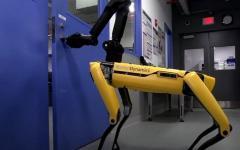 Cani-Robot alla ribalta: aprono le porte e conoscono il bon ton
