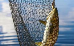 Primo aprile senza pesci