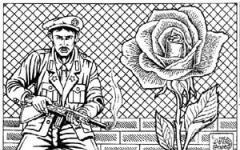 Rosa al confine