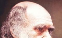 La Chiesa Anglicana si scusa con Darwin
