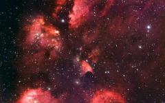 Una zampa di gatto fra le stelle