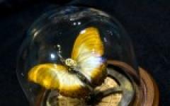 A Octavia Butler e John Clute il Solstice Award 2012