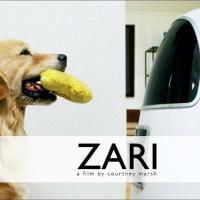 Il cane e il robot
