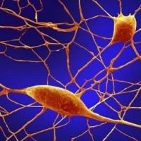 È nelle cellule Gps del cervello la sede dell'immaginazione