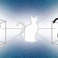 il gatto di Schrödinger è ubiquo