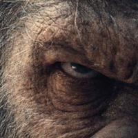 The War – Il Pianeta delle Scimmie è nelle sale, ed è cupissimo