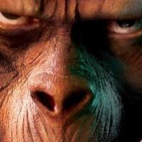 La rinascita delle scimmie